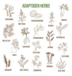 adaptogen herbs hand drawn set of medicinal vector image