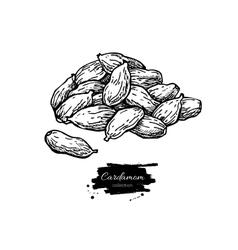 Cardamom seed heap hand drawn vector