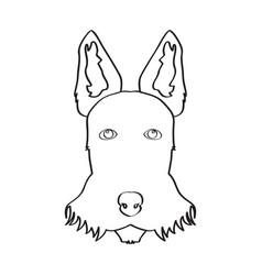 Isolated schnauzer avatar vector