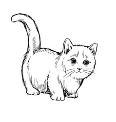 little cat hand drawn vector image