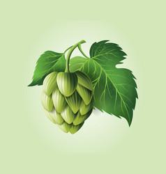 realistic beer green hop cones leaves vector image