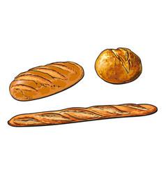 sketch white loaf bread french baguette set vector image