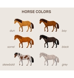 infographic with main horse colors vector image vector image