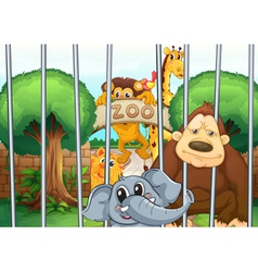 a zoo and the animals vector image
