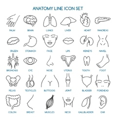 Anatomy line icons vector
