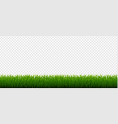 green grass border isolated transparent background vector image