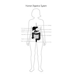 Isolated digestive system vector