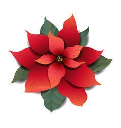 red poinsettia isolated white background vector image