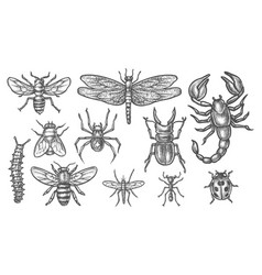 Set insect sketch vintage drawing bugs vector