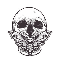 Skull with moth vector