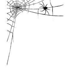 Spider and spiderweb vector image