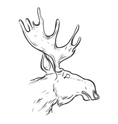 Hand drawn graphic moose vector