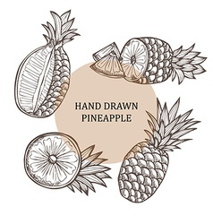 Hand drawn pineapple fruits vector