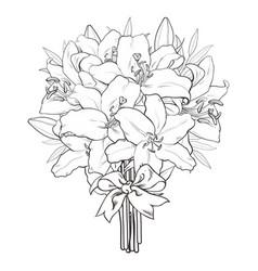 hand drawn tulip monochrome bouquet vector image