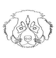 isolated saint bernard avatar vector image