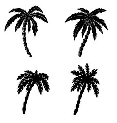 Set of hand drawn palm on white background design vector