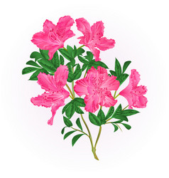 pink flowers rhododendron twig with leaves vector image vector image