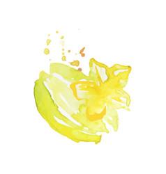 juicy ripe carambola fruit watercolor hand vector image