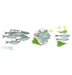 sprat sketch fish icon image of vector image