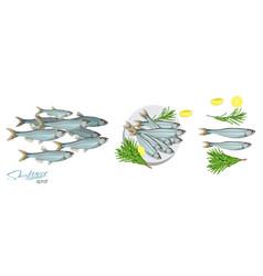 Sprat sketch fish icon image vector