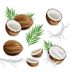 coconuts with splash set collection vector image