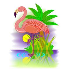 Flamingo beautiful bird living south countries vector