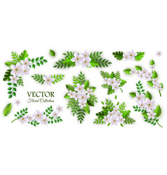 floral compositions set with vector image