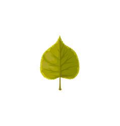 Linden leaf icon cartoon tree foliage vector