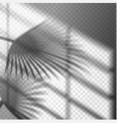 blurry palm branch window reflection or shadow vector image