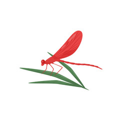 dragonfly sitting on green leaf fast-flying vector image