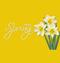 spring card narcissus flowers bouquet on yellow vector image