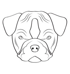 isolated pitbull avatar vector image vector image