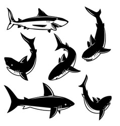 set of shark design element for poster print vector image