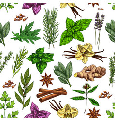 Spices herbs and food seasonings seamless pattern vector