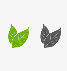 tea leaves icon set green and gray isolated vector image