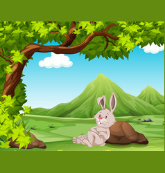 a rabbit in nature vector image