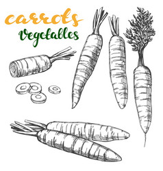 Carrots vegetable set hand drawn vector