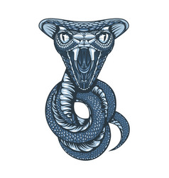 drawing cobra coiled into rings and ready vector image