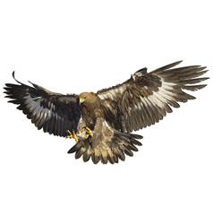 Golden eagle landing hand draw vector