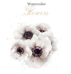 white poppies flowers isolated beautiful vector image