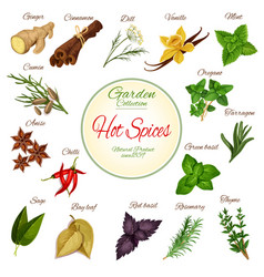 hot spice herb and condiment poster design vector image