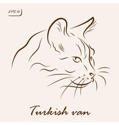 Turkish van cat vector image vector image