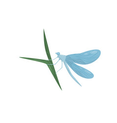 blue dragonfly sitting on green leaf flying vector image