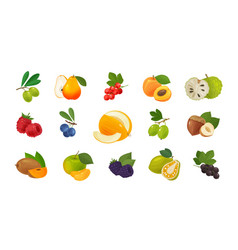 Fruits and berries set of colored icons food vector