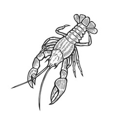 Hand drawn marine lobster vector