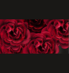 Red roses watercolor background template vector