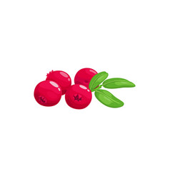 Ripe cranberry fruits or berries food from garden vector