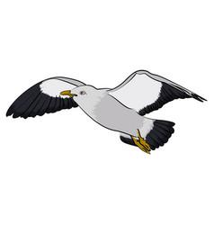 Seagull in sky vector