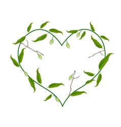Branch of Chebulic Myrobalans in A Heart Shape vector image vector image