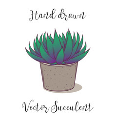 cute hand drawn colorful succulent astroloba tenax vector image